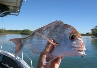 Coastal Sports Fishing Safaris